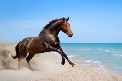 Anwalt für Pferderecht