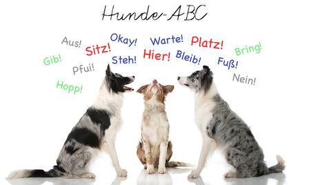 Tierrecht Köln