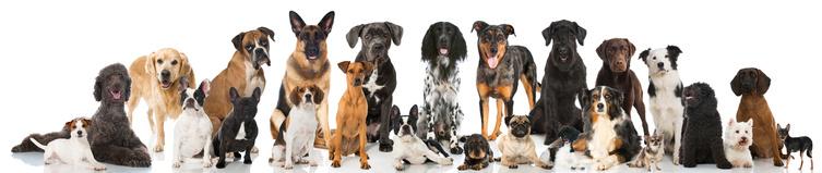 Anwalt für Tierrecht Duisburg