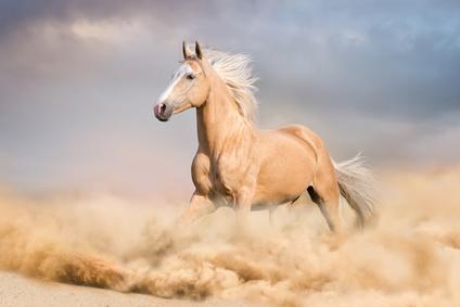 Anwalt für Pferderecht Köln