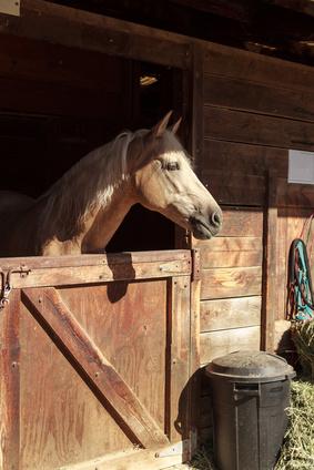 Pferderecht Rain Beaucamp