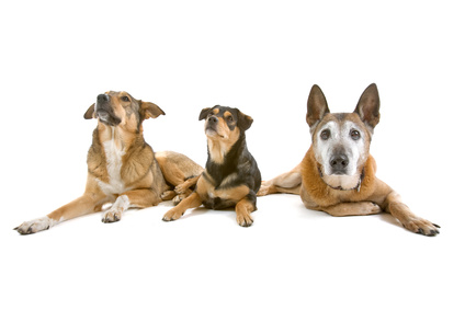 Hundehaltungsverbot