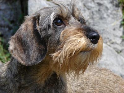 AAnwalt für Tierrecht Duisburg