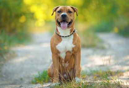 Umzug mit Listenhund