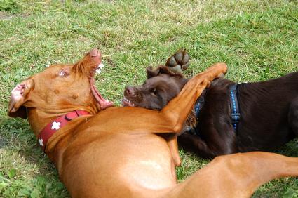 Hundebesitzerin bei Rauferei gebissen
