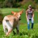 Erlaubnispflicht für Hundetrainer gemäß § 11 I S. 1 Nr. 8 f TierSchG